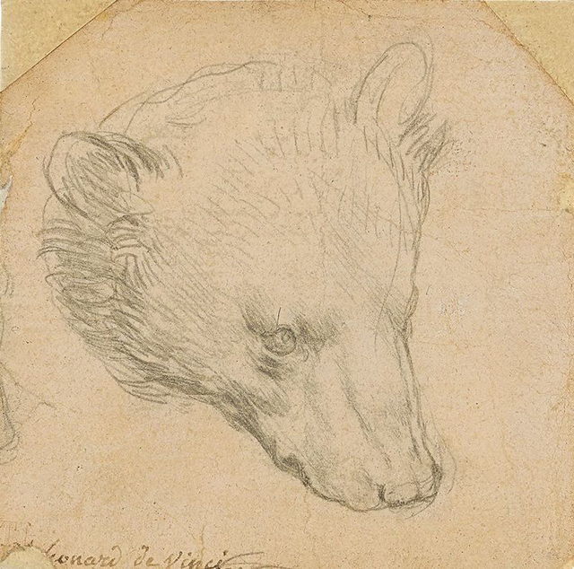 Леонардо да Винчи_Голова медведя (1480-е), фото - Christie's