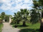 Парк Южных культур в Адлере-01