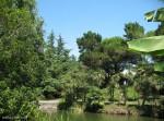 Парк Южных культур в Адлере-14