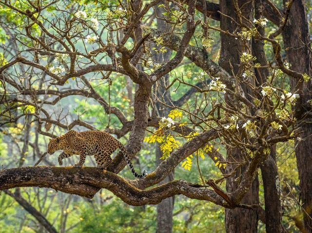 The Dream, photo: Naveen Srikantachari