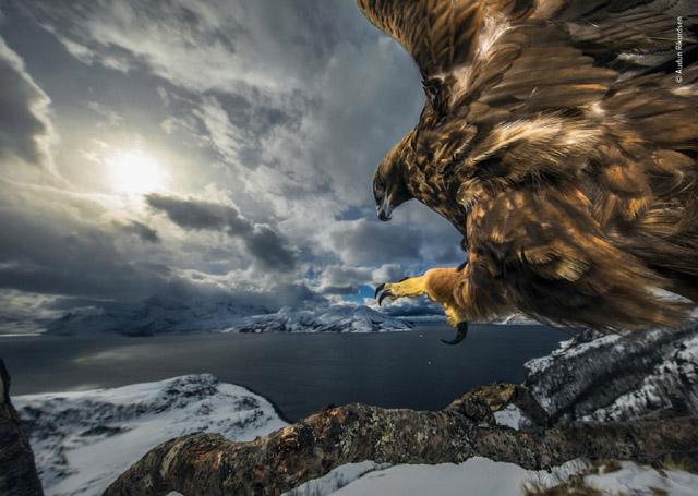 Audun Rikardsen «Land Of The Eagle», фото: © Natural History Museum / © Audun Rikardsen