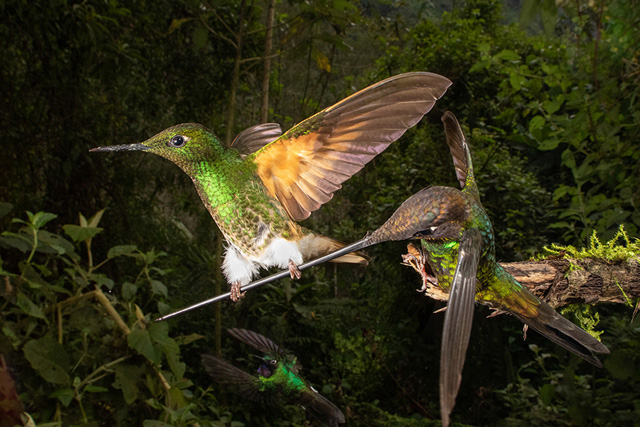Bird Photographer Of The Year-02