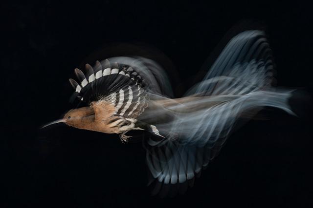 Bird Photographer Of The Year-04