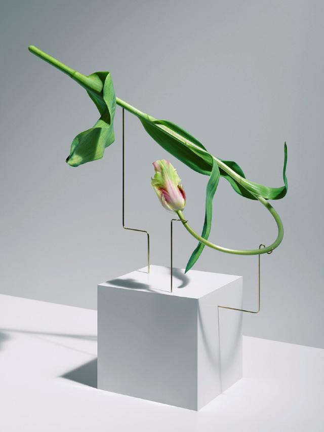 Танцующие тюльпаны Карла Клейнера
