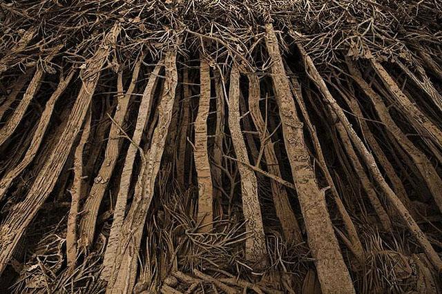 Картонный лес Евы Жоспин